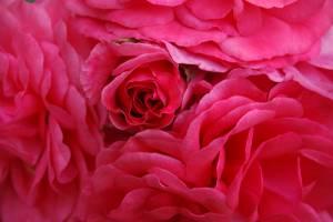 Blume 01